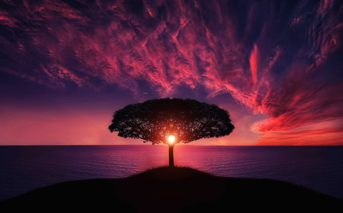 A hot pink, orange, and deep violet sunset is behind a tree with a setting sun nestled in its branches. It is an image of the world tree itself, standing at the edge of everything.